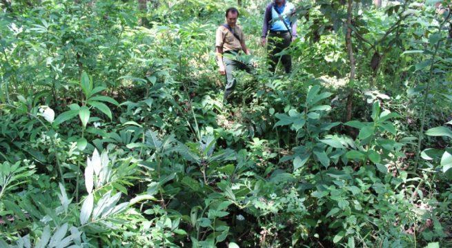 Salah satu titik Kuburan Massal di hutan Regaloh, Pati [Foto: Sri Putjiwati-Radar Kudus]