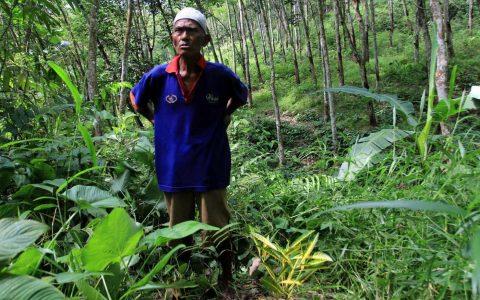 Keterangan Gambar : Kirno, sedang menunjukkan lokasi kuburan massal Singaranting. Kuburan ditandai dengan Pohon Puring. Pada geger 1965, ia bertugas menggali kuburan untuk orang-orang yang dituduh PKI. [©Beritagar / Aris Andrianto]