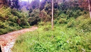"""GAMBAR: Profil hutan di kawasan cagar alam Gunung Tilu Bandung selatan. Di bagian dalam """"cagar alam"""" ini juga telah dibudidayakan pohonan kebun, seperti kopi dan sayuran [Foto: Humas YPKP'65]"""