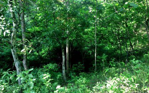 """MONGGOT: Situs Monggot berada di Kawasan Pemangkuan Hutan (KPH) Geyer Purwodadi, salah satu lokasi """"kuburan"""" dan tempat pembantaian massal tapol 65. Lokasinya berupa lereng dengan jurang berupa cerukan parit memanjang [Foto: Humas YPKP 65]"""