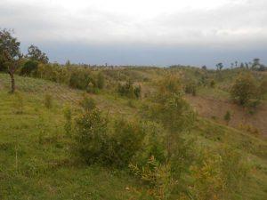 SANGGRAHAN: Hutan Sanggrahan di perukitan Gundih yang kini gundul [Foto: BU]
