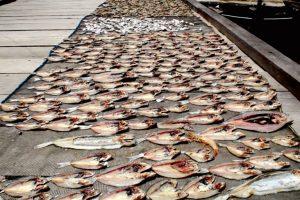Ikan asin, salah satu sumber penghasilan warga nelayan ini juga terancam dengan ada tambang emas di Gunung Botak yang gunakan sianida dan merkuri. Foto: Nurdin Tubaka/ Mongabay Indonesia