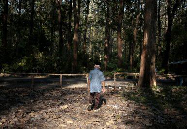 Dalam foto 4 September 2016 ini, Sabar, mantan tahanan politik yang dipenjara selama delapan tahun tanpa diadili karena menjadi anggota Front Petani, salah satu organisasi massa Partai Komunis Indonesia, berjalan di hutan jati tempat kuburan massal berlokasi, di Darupono, Jawa Tengah, Indonesia. [Kredit Gambar: AP Photo / Dita Alangkara]