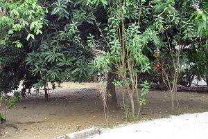 POS KERJAPAKSA: Eks lokasi pos pengawas kamp konsentrasi dan kerjapaksa Tapol 65 di daerah Cikokol Tangerang [Foto: YPKP'65/Hum}