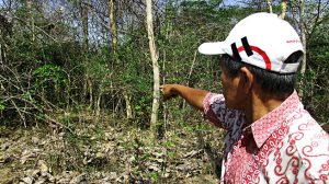 KUBURAN MASSAL: Lokasi Kuburan Massal korban Genosida 1965 lainnya di kawasan Hutan Salam Jatirogo Tuban. [Foto: Humas YPKP 65]