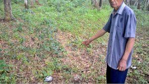 Saksi mata peristiwa 1965, Jumar, menunjukkan lokasi diduga kuburan massal PKI Tanah Kafi, Cipari, Cilacap, Jawa Tengah. (Foto: Liputan6.com/Muhamad Ridlo)