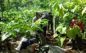 Illustrasi: Salah satu basis konflik agraria di Banyuwangi yang melibatkan petani dengan pihak pt Perkebunan [foto: ist.]