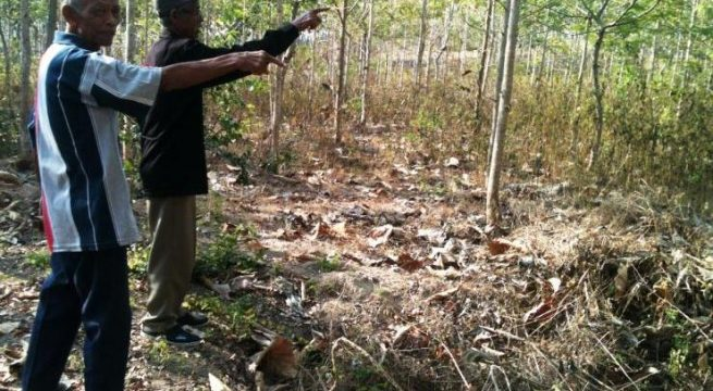 Supardi dan Radimin menunjukkan lokasi kuburan massal di Hutan Jeglog, Pati. Foto: Noni Arni.